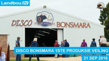 Disco Bonsmara Veiling 21 Sep 2016 Hoogtepunte
