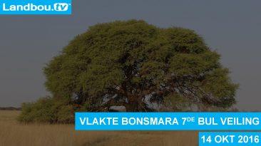 Vlakte Bonsmara 7de Bul Veiling 2016