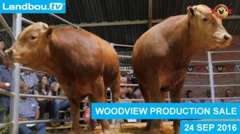 Woodview Angus & Wagyu Veiling 24 September 2016
